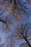 查寻在山毛榉树森林的一个低角度视图在冬天季节期间 库存照片
