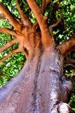 查寻在树阴影笼罩下 图库摄影