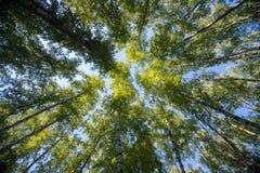 查寻在森林-绿色树枝自然摘要里 库存照片