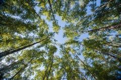 查寻在森林-绿色树枝自然摘要里 库存图片