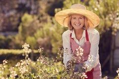查寻从她的药草园的微笑的资深妇女 库存照片