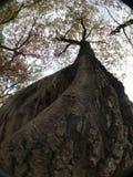 查寻往天空的树皮 库存图片