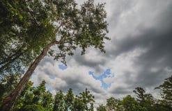 查寻树的看法 库存图片