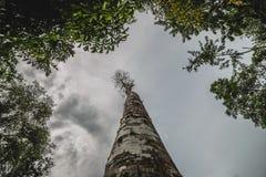 查寻树的看法 免版税库存图片