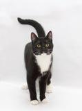 查寻黑白小猫的少年 免版税库存图片
