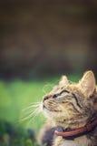 查寻的猫在草和 库存图片