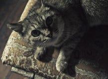 查寻的猫 库存图片