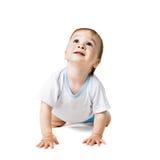 查寻的婴孩爬行和 库存照片