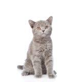 查寻空白年轻人的背景猫 背景查出的白色 免版税库存图片