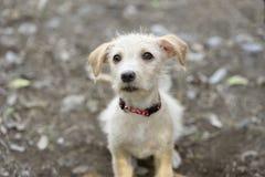 查寻逗人喜爱的小狗哀伤和好奇 免版税库存图片