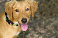 查寻逗人喜爱的狗 库存图片