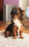 查寻逗人喜爱的狗 免版税库存照片