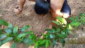 柬埔寨人在村庄小心种植小植物和树 股票录像
