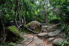 柬埔寨密林 库存照片