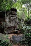 柬埔寨密林 免版税图库摄影
