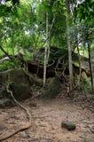柬埔寨密林 免版税库存照片