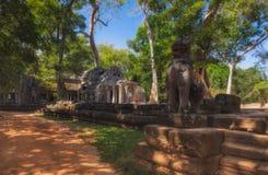 柬埔寨收割siem 在吴哥窟附近的暗藏的密林寺庙ta prohm在暹粒市,柬埔寨是其中一多数 免版税库存照片