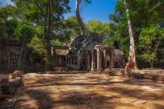柬埔寨收割siem Ta Prohm寺庙废墟 库存图片