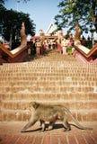 柬埔寨教会猴子 免版税图库摄影