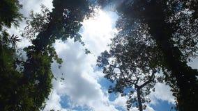 柬埔寨蒙多基里省 免版税库存图片