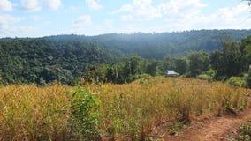 柬埔寨蒙多基里省 库存照片