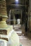 柬埔寨长满的废墟 库存照片