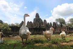 柬埔寨 吴哥城市 在riep siem寺庙附近的bayon柬埔寨 暹粒省 暹粒市 免版税图库摄影