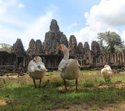 柬埔寨 吴哥城市 在riep siem寺庙附近的bayon柬埔寨 暹粒省 暹粒市 图库摄影