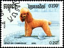 柬埔寨-大约1990年:邮票,打印在柬埔寨,显示一只狮子狗 免版税图库摄影