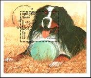 柬埔寨-大约1990年:邮票,打印在柬埔寨,显示一条Bernese狗 库存照片