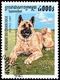 柬埔寨-大约1997年:邮票,打印在柬埔寨,显示秋田Inu狗 免版税库存图片