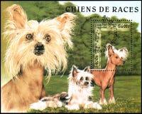 柬埔寨-大约1997年:邮费纪念品板料,打印在柬埔寨,显示装缨球汉语,系列养殖狗 库存图片