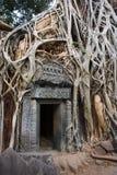 柬埔寨- Ta Prohm在Angkor Wat的寺庙废墟   库存图片