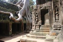 柬埔寨 Ta Prohm寺庙 暹粒省 暹粒市 免版税图库摄影