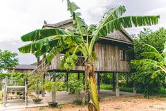 柬埔寨Kampot胡椒种植园亚洲东南部 免版税库存图片