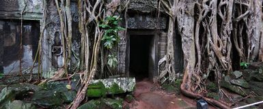 柬埔寨prohm ta寺庙 库存图片