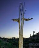 柱仙人掌仙人掌骨骼在日落的亚利桑那 库存照片