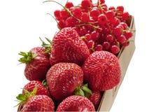 柳条筐用成熟草莓和红浆果 特写镜头 在空白背景的孤立 库存照片