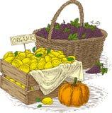 柳条筐用成熟葡萄、大橙色南瓜和木箱用柠檬 免版税库存图片