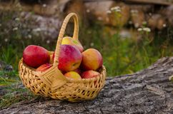 柳条筐用明亮的红色苹果在一个木甲板站立  免版税图库摄影