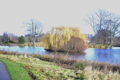 柳树和其他灌木水的包围了海岛 库存照片
