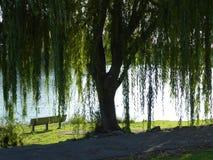 柳树和长凳 免版税库存照片