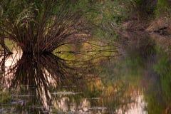 柳树在日落的水中 免版税库存照片