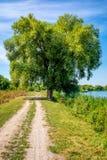 柳树照片在美丽的蓝色湖附近的有路的 免版税库存照片