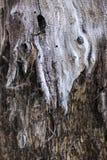 柳树 库存图片