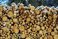柴堆在有雪的冬天森林里 库存照片