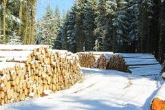 柴堆在有雪的冬天森林里 图库摄影