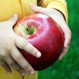 柴尔兹手用大新近地被收获的苹果 免版税图库摄影