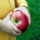 柴尔兹手用大新近地被收获的苹果 免版税库存照片