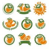 柿子标签和元素集 向量 库存照片